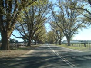 Bacchus Marsh Avenue of Honour