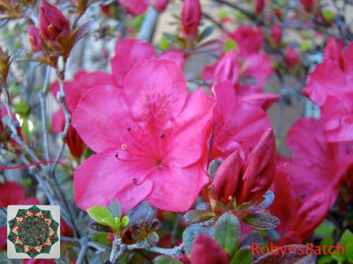 Vibrant pink ...