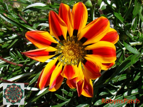Rich contrast of red and yellow in nature - not just in patchwork!